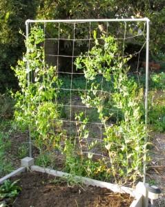 Square foot garden trellis