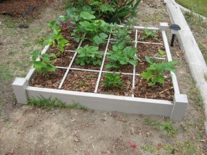 Square foot garden frame planted